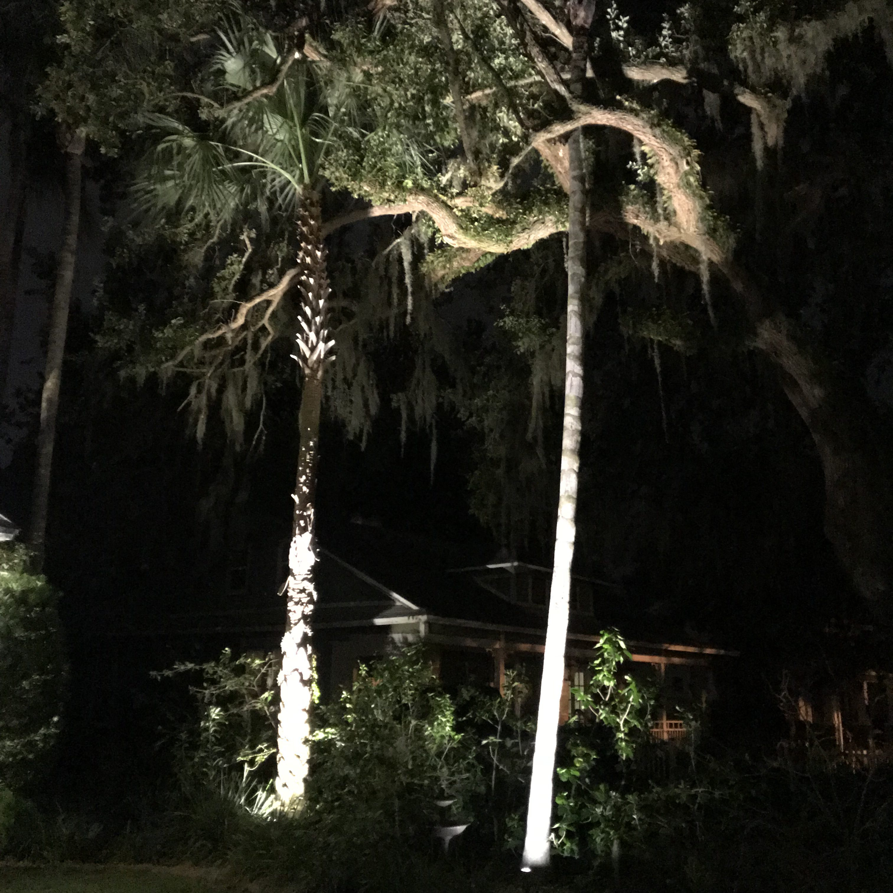 well lighting of large palm trees