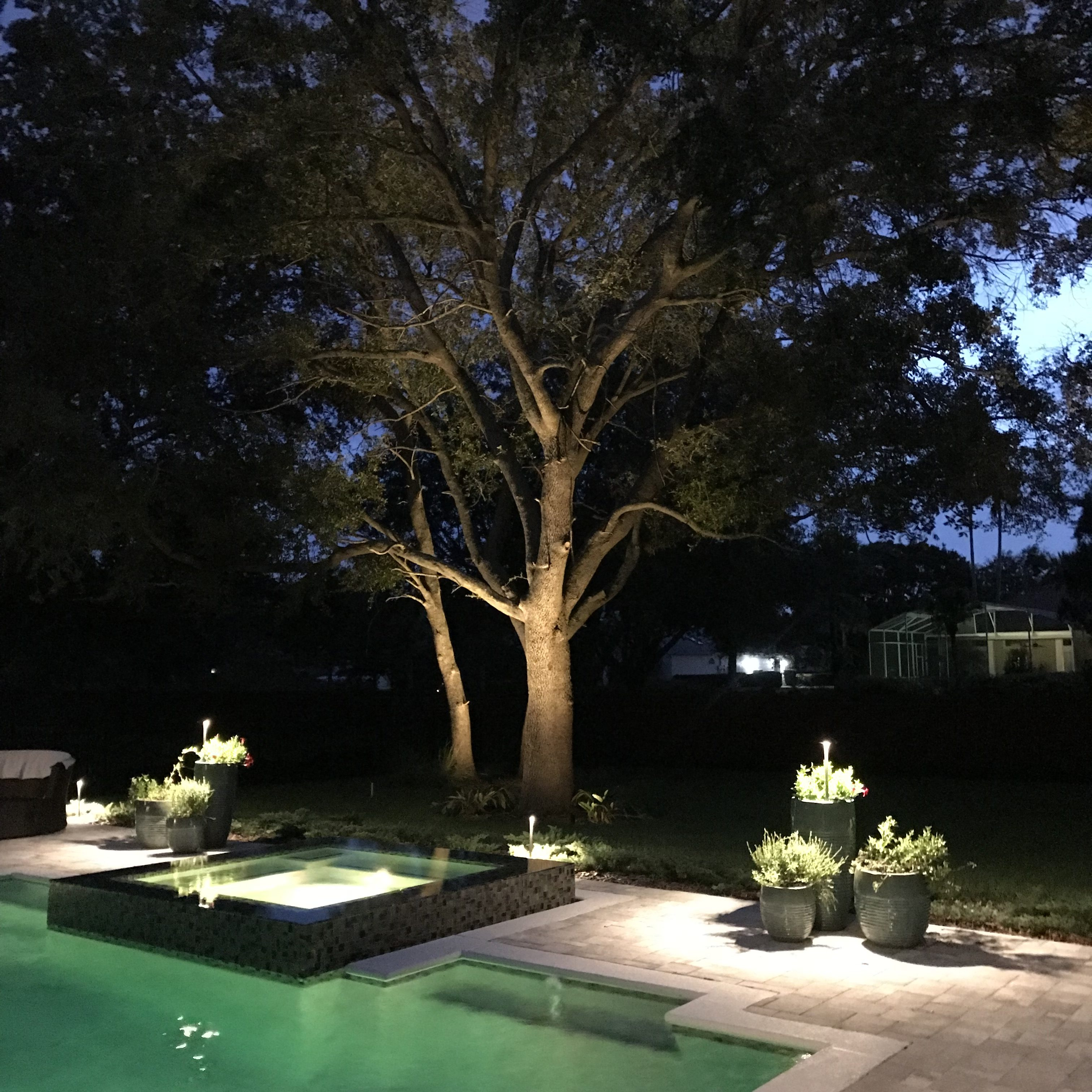 view of pool and tree landscape lighting