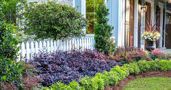 create big garden appeal with compact