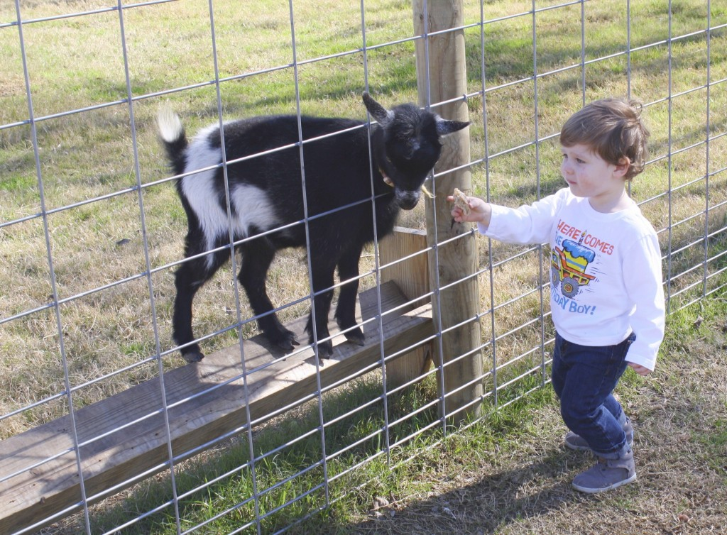 Harper's 2nd Birthday on the Farm | Southern Made Blog