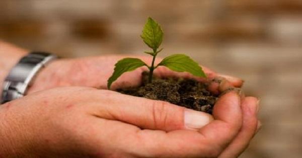 tree-seedling