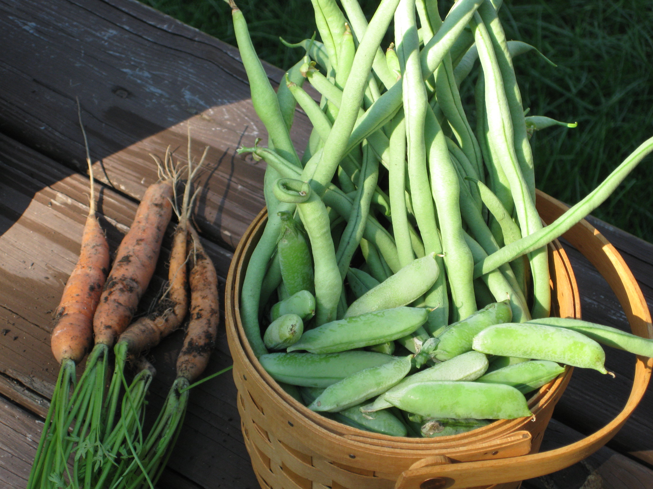 Beans, Peas and Carrots 8-25-09