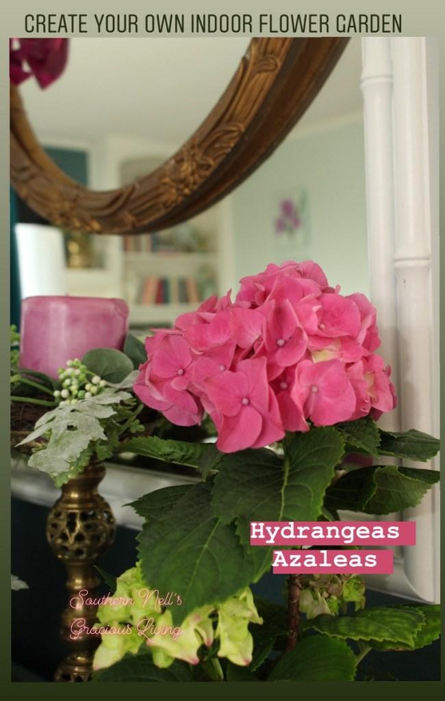 Pink Hydrangea in Indoor Flower Garden