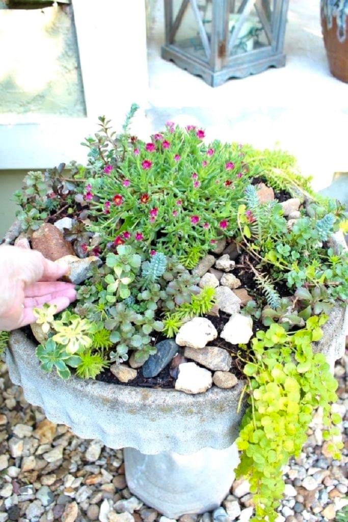 DIY Succulent Birdbath Garden
