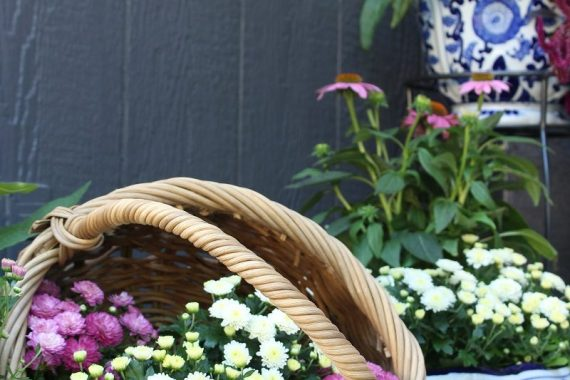 Basket of Fall Mums