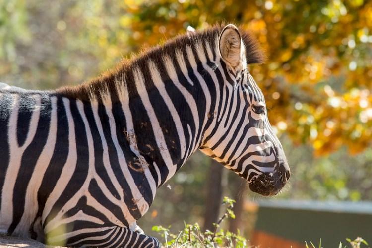 Chestatee Wildlife Preserve