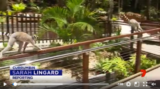Currumbin Wildlife Sanctuary-Recent Project-Stainless Grab Rails