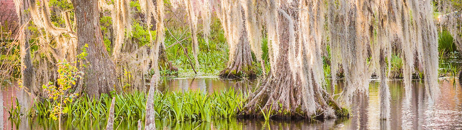 swamp outside of Lafayette, Lousiana