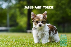 NAMED Sable Parti