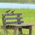 Birds-VistaViewPk_TH5350