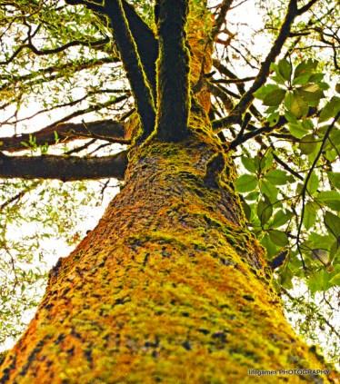 Mount-Worth-State-Park_0082b
