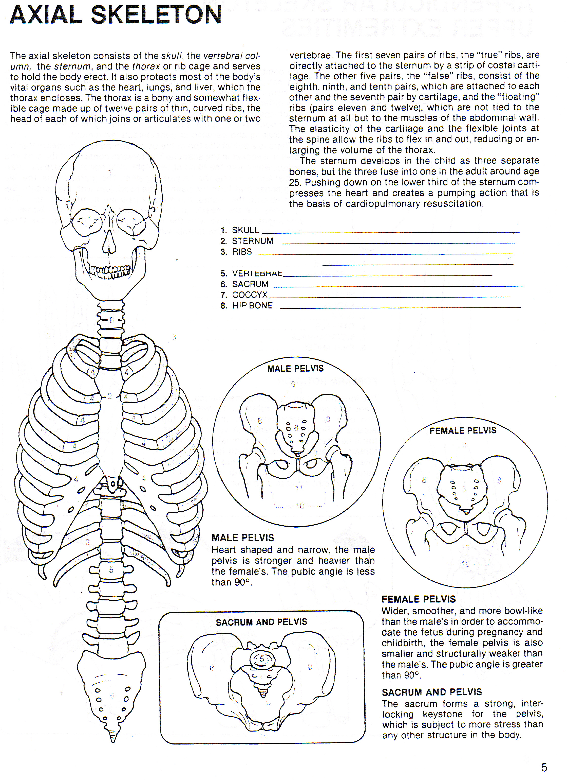 Axial Skeleton Coloring Sheet