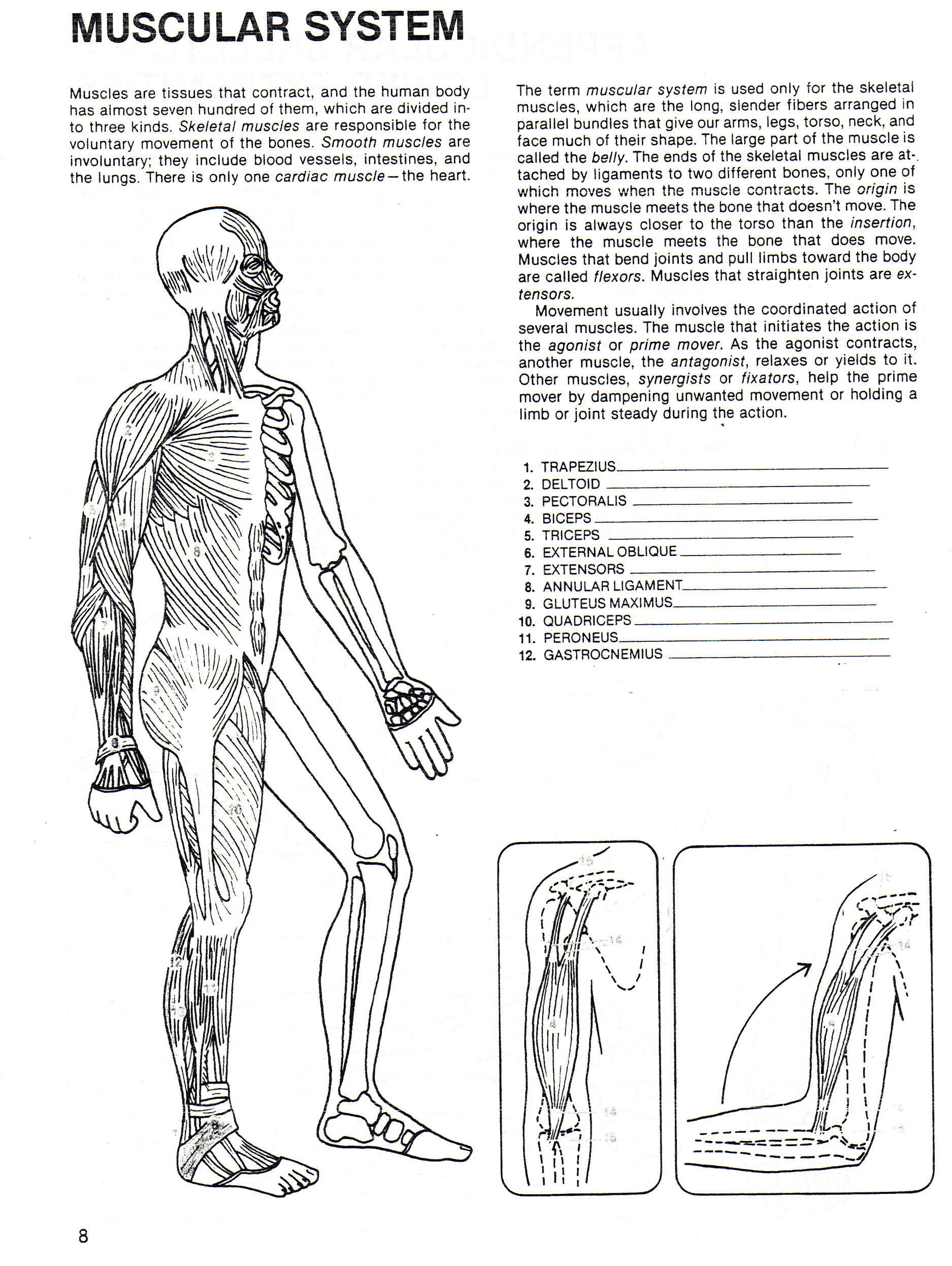 Anatomy Cut Out Worksheet