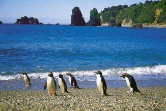 LM-penguins-2