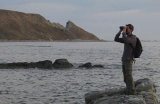 South Bay birding
