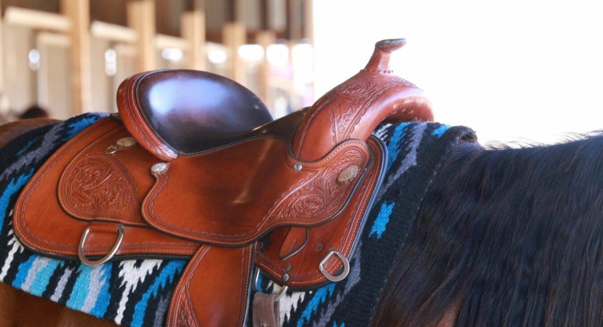 Summer Pony Camp, Appaloosa Show, Reining, Paint Horses