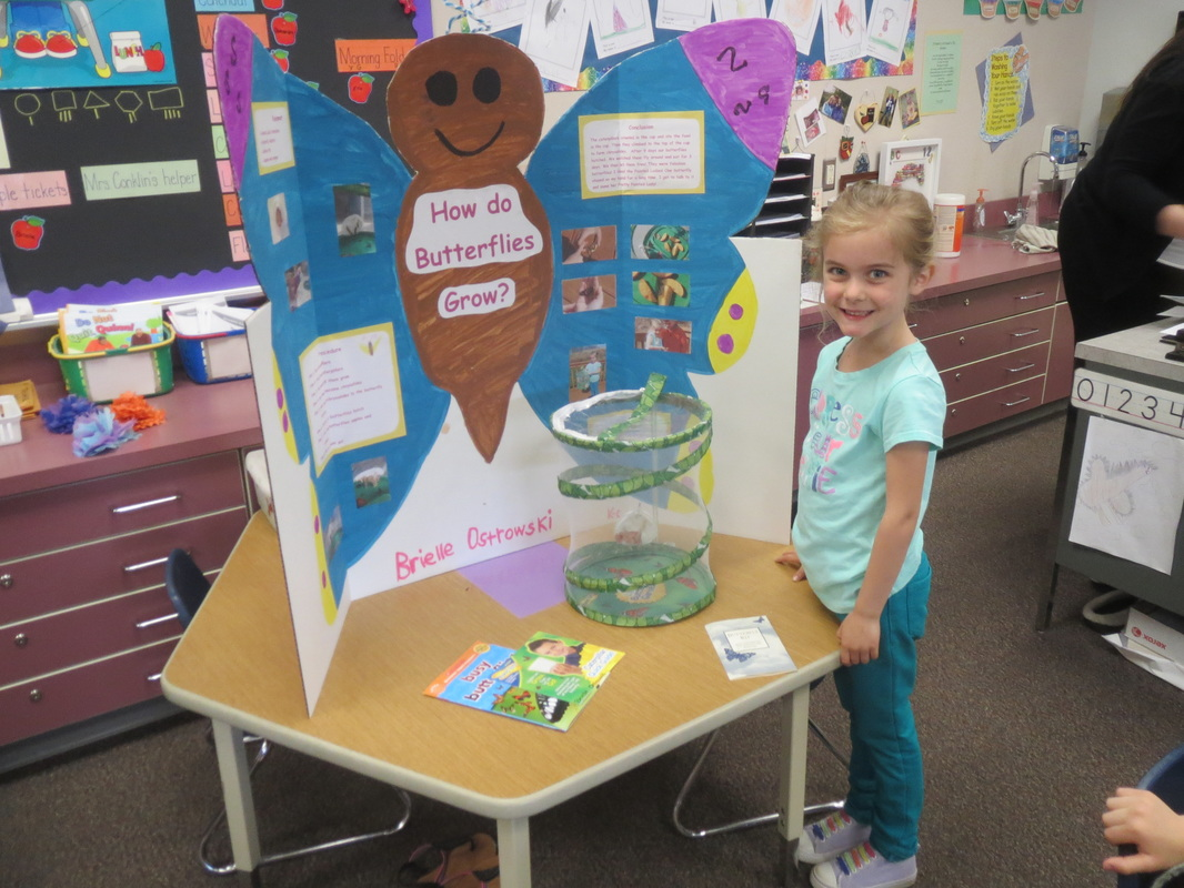 Science Fair Project For Kindergarten