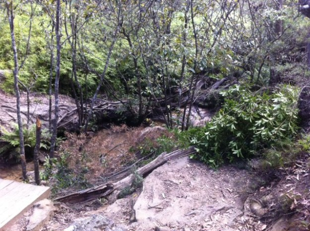 Brushmatting of Lawson Creek, Adelina Falls, showing bare stream banks. 2017 Photo: BMCC