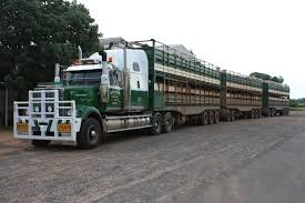 Roadtrain livestock