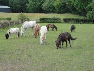 Clough Farm