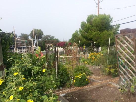 south laguna community garden park by southocbeaches.com