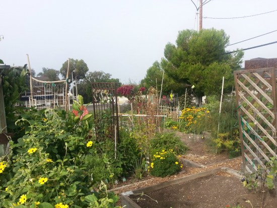 South Laguna Community Garden Volunteer Event Tuesday April