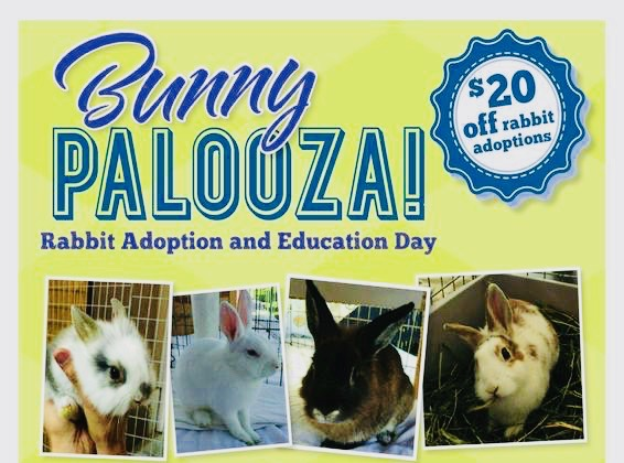 San Clemente Bunny Palooza Febraury 24 2018