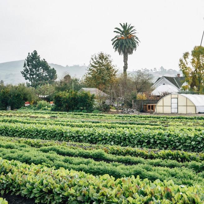 San Juan Capistrano Ecology Center Courtesy of The Ecology Center