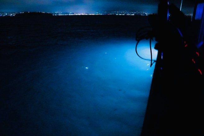 Ocean Institute Bioluminescent Night Cruise Courtesy of Facebook.com:OceanInstitute