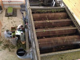 The view from atop the harvester as the machinery did its work. Courtesy photo