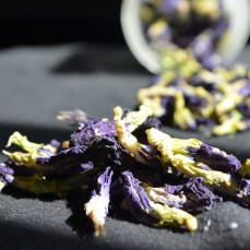 This is dried butterfly pea flowers growth in Thailand