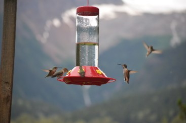 Many humming birds visit this house.