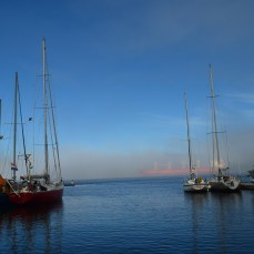 Foggy until late morning at the harbour.