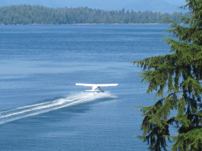 Beaver taking off from Bamfield