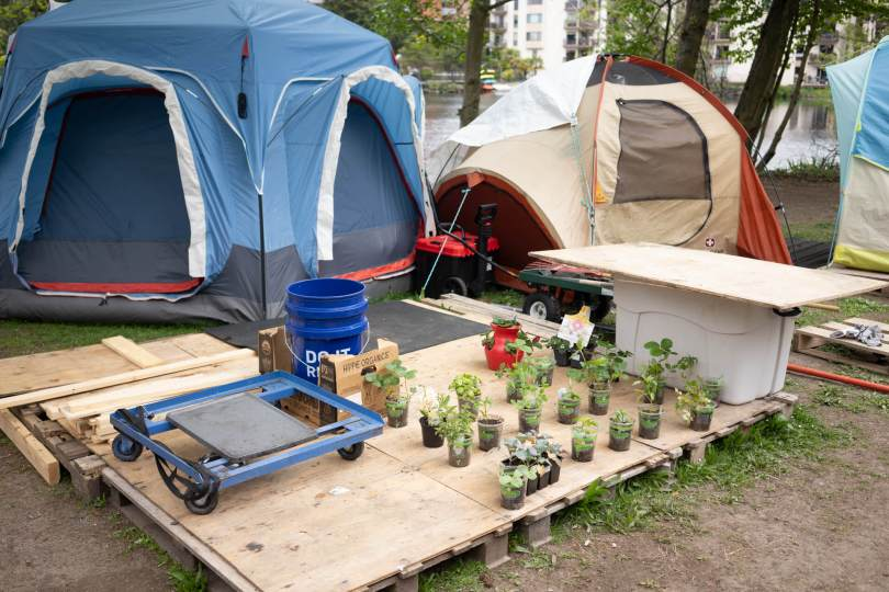 photo of tents with small potted plants in front of them