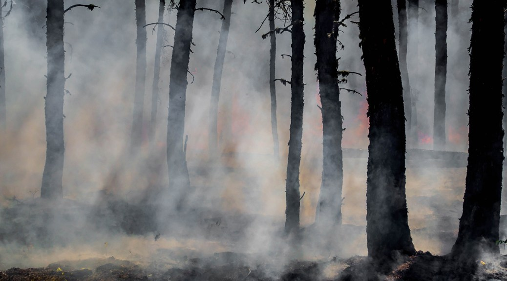 Photo of smoke and glowing embers with charred trees in a forest.