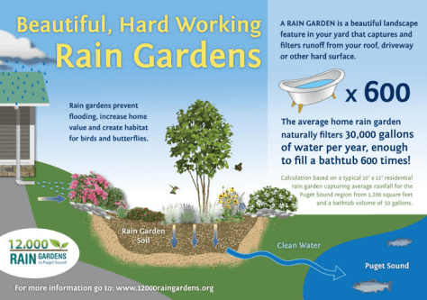 rain garden image