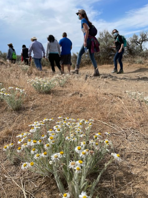 Flowers in foreground, people hiking in background. Team Naturaleza took several Latino families to Quincy Lakes Wildlife Reserve on May 22, 2021. (photo courtesy of Team Naturaleza)