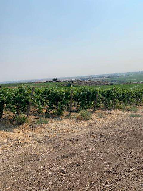 Photo depicting a vineyard.