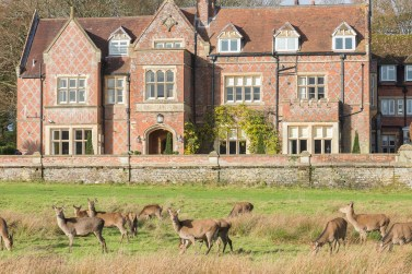 Burley Manor exterior with red deer - New Forest (SGF Nov15) (5)