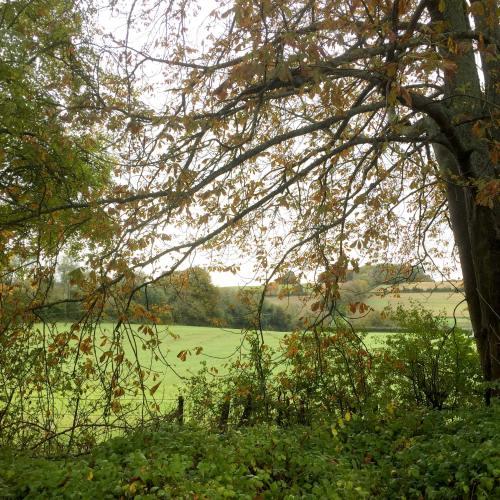 walk across fields Brocklands