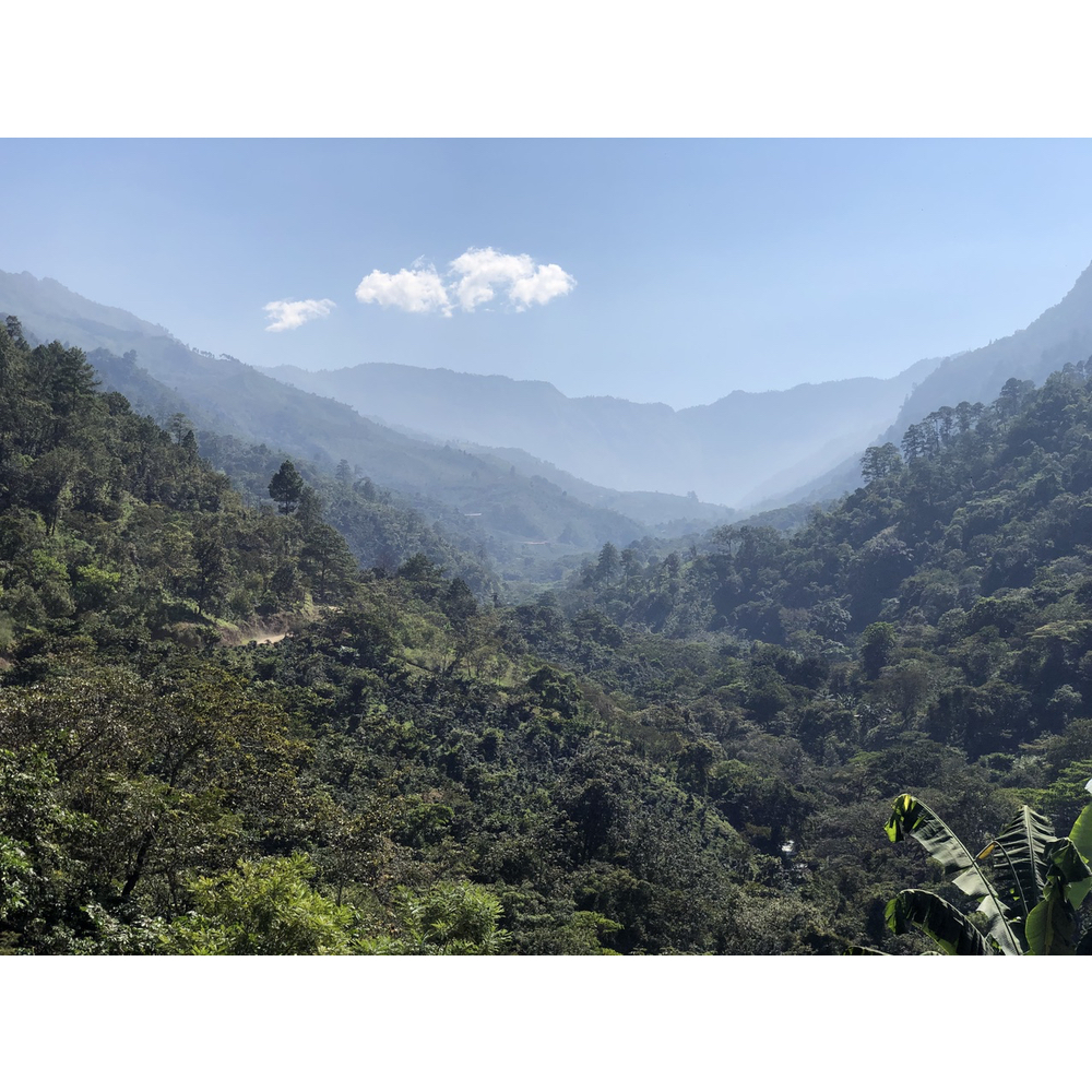 Mountains and coffee plantations in Amantenango de la frontera in Chiapas Mexico