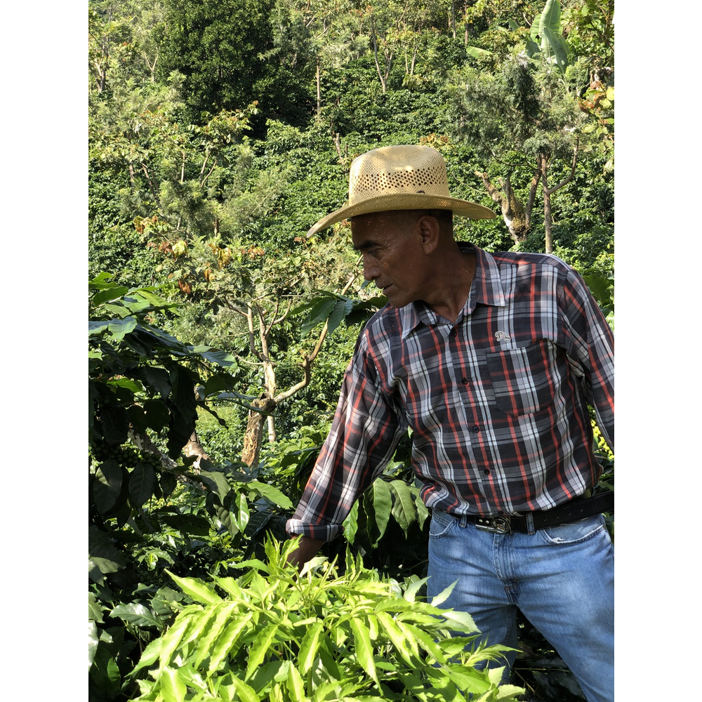 Coffee farmer Luis Ordonez tending to his shrubs in Chiapas Mexico