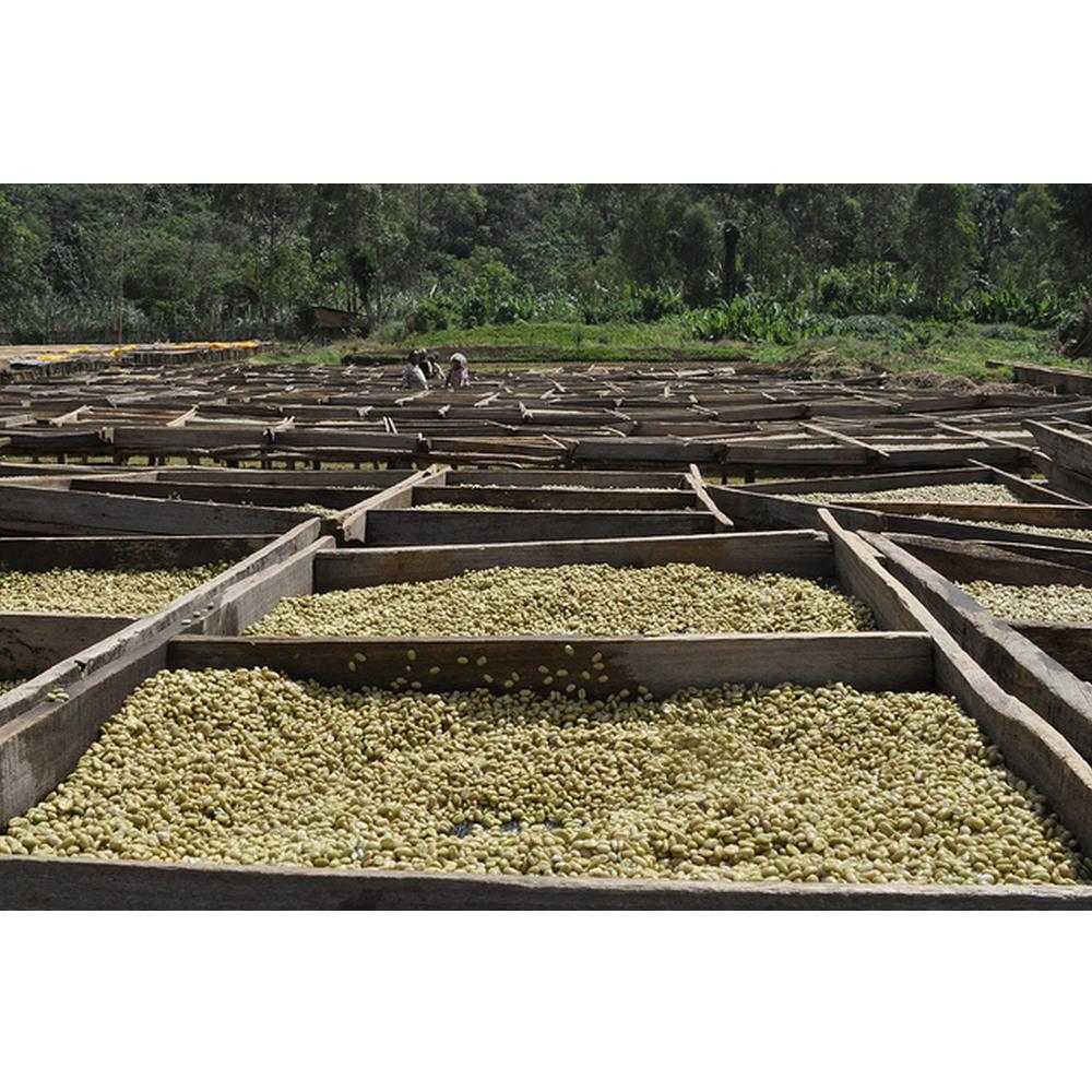 bule-hora-guji-ethiopia-south-slope-coffee-1