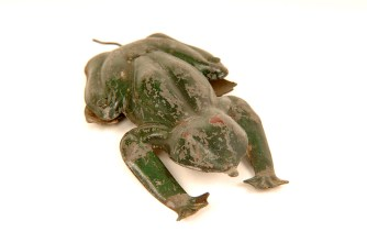 Frog toy purchased at Peckham Fair by the Cuming family (C10138)