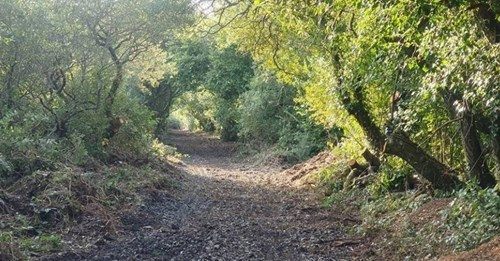A path surrounded by trees on either side