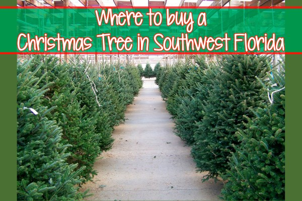 Where to buy a Christmas Tree in Southwest Florida