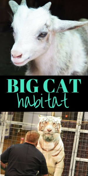 Big Cat Habitat
