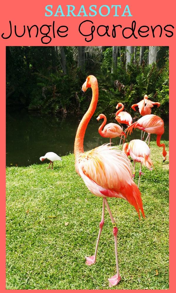 Sarasota Jungle Gardens Mom Explores Southwest Florida