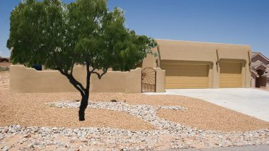 Honey Mesquite Trees Southwest Landscape